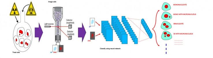 Рисунок 2. Рабочий процесс автоматической классификации изображений.