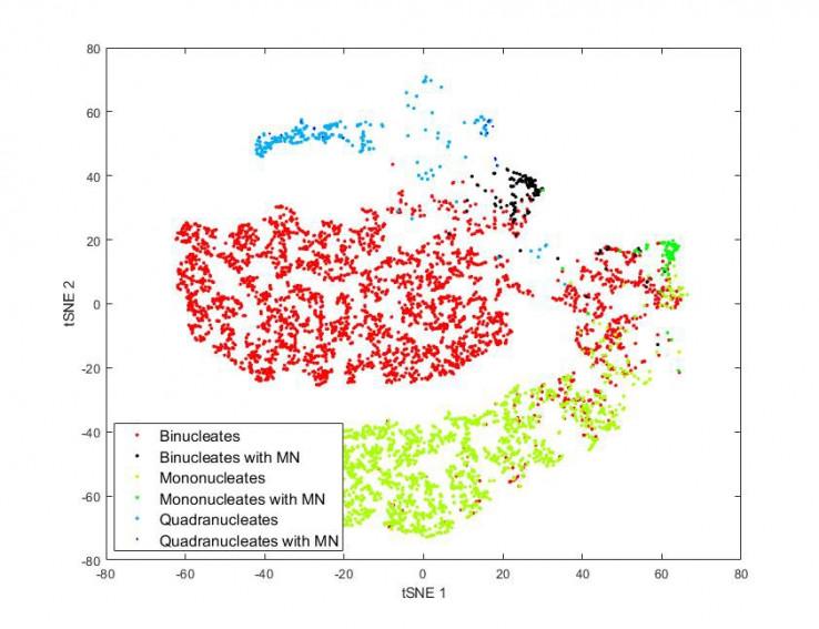 Рисунок 6. tSNE визуализация данных, показывающих типичные типы клеток из анализа генотоксичности.