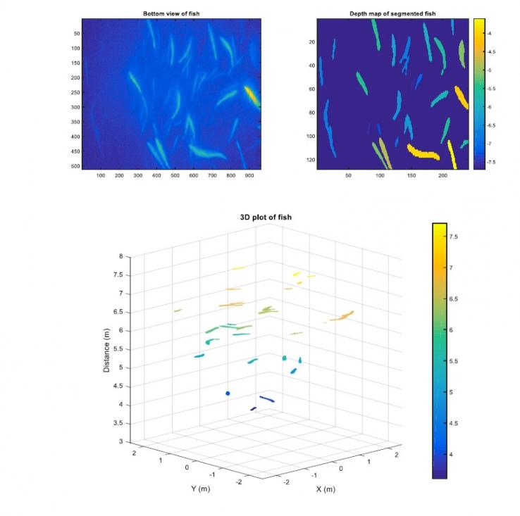 Визуализация биомассы рыб и моделей поведения.