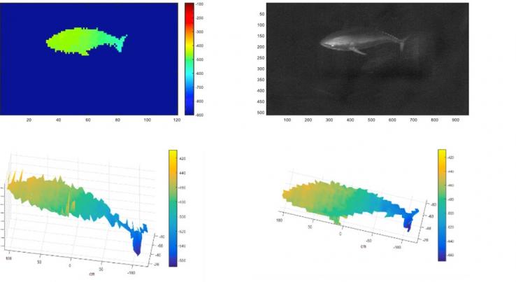 Результаты измерения красного тунца камерой UTOFIA.
